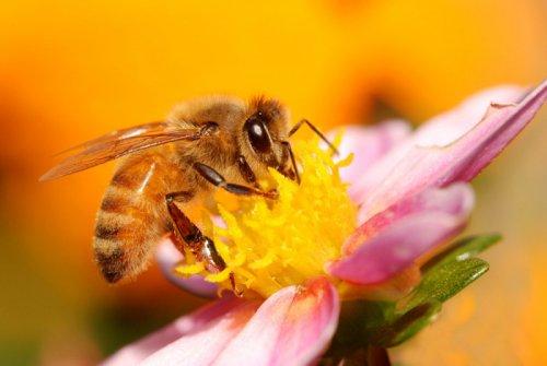 Факт о пчелах