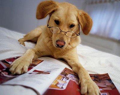 Самая древняя порода домашних собак