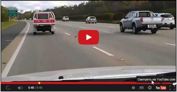 Голубь против машин на автостраде