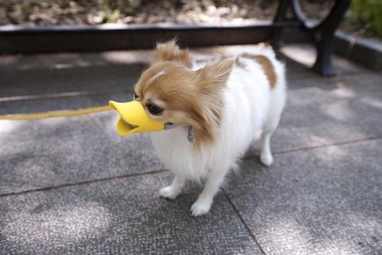 Забавный намордник для вашей собаки