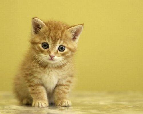 Котята - яркие фотографии этих милых животных